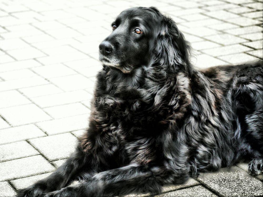 Photo in HDRI #ypa2013 #dog #pet #hdr #black #animal