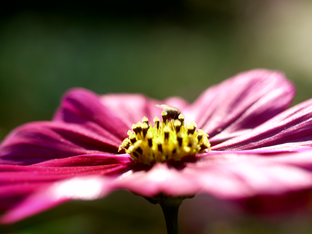 Photo in Random #macro #close up #flower #perspective #nature #garden #bee