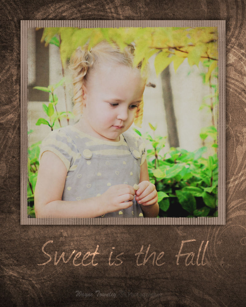 sweet is the Fall by wayne15575