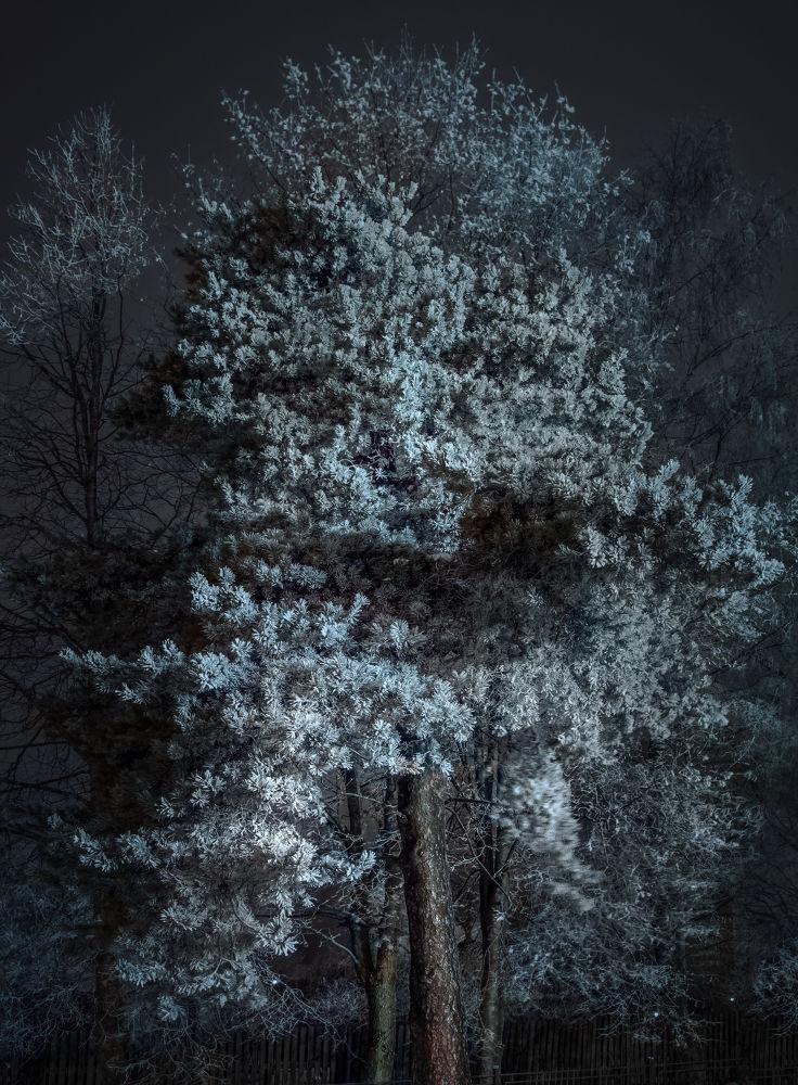 magic light by Anton Bulygin