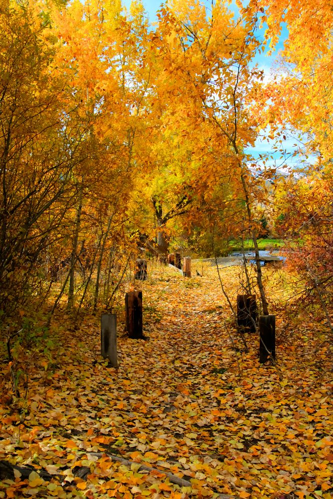 Path of Fall Foliage by kevinbone94