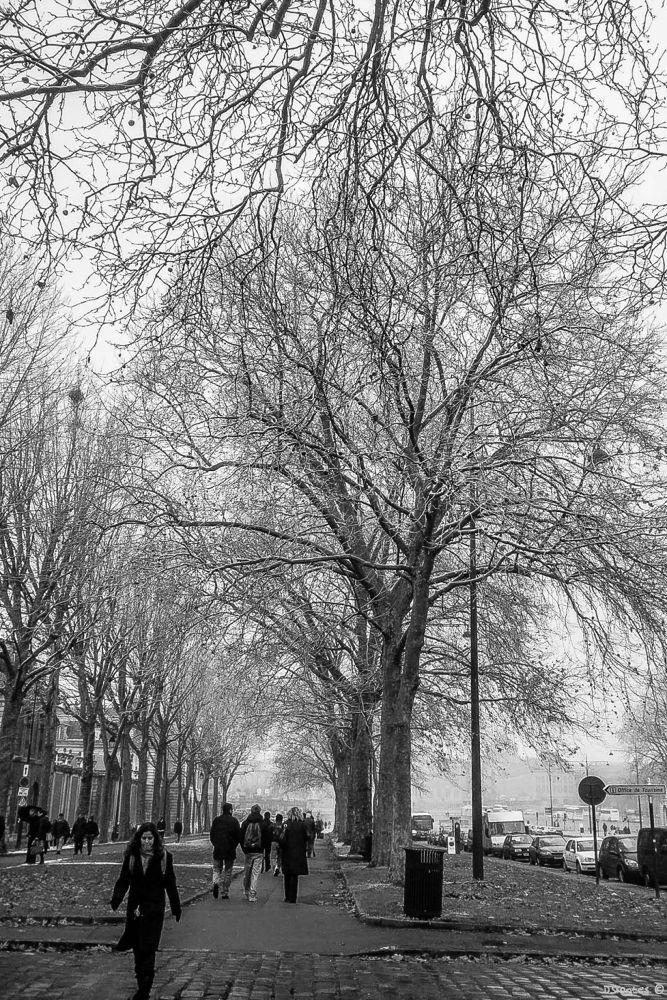 Winter in Versailles by Doris Fontes