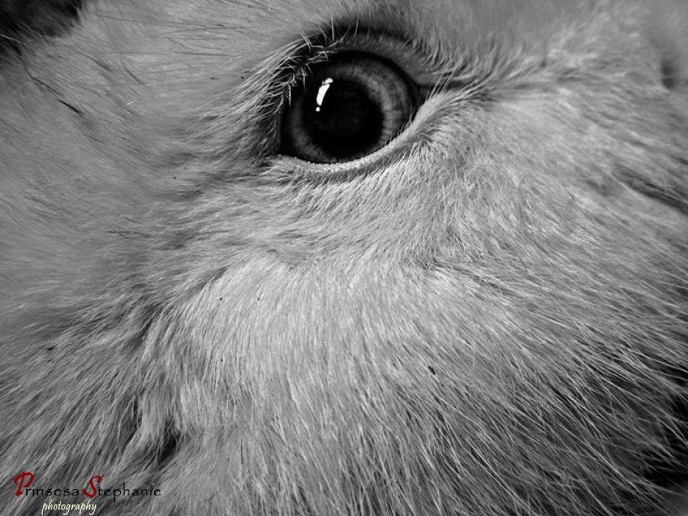 My Bunny Jack Eye by My DigiCam Photography_Prinsesa Stephanie