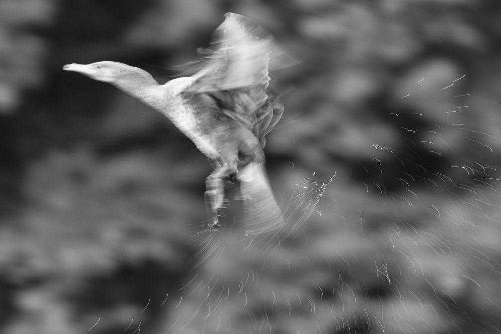 Cormorant Lands by Paul Brown