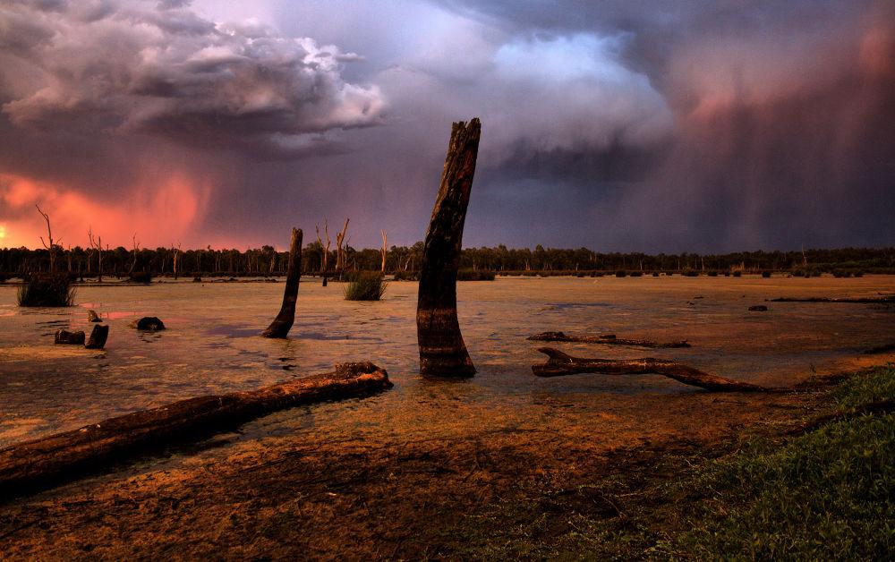 REEDY SWAMP AUSTRALIA by mark09