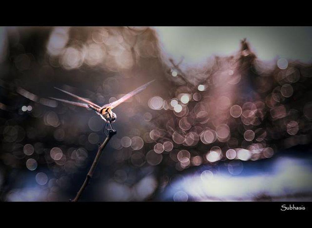 Perfect Landing... by Subhasis Santra