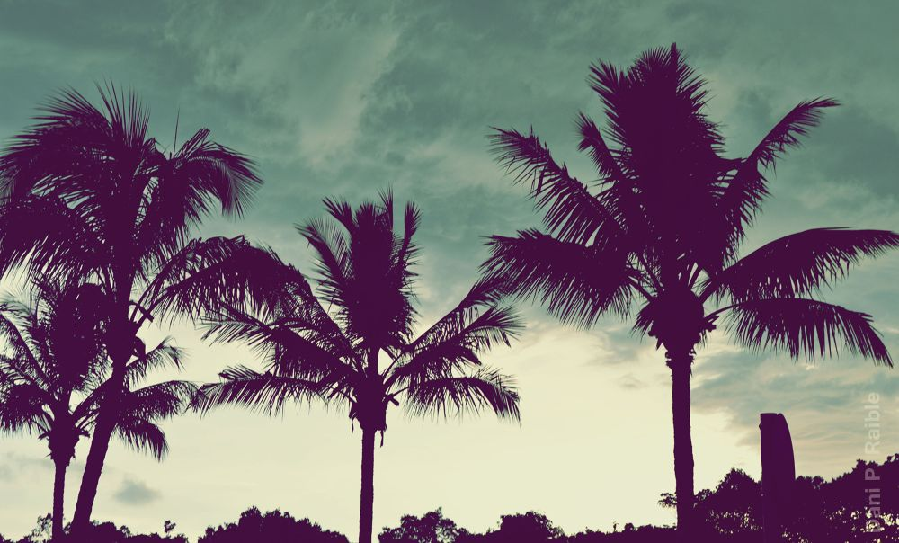 Photo in Nature #palms #sky #rain #beach