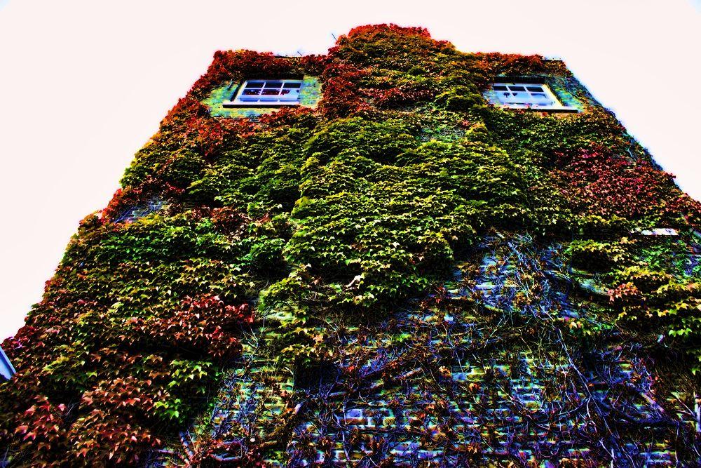 House by Joaquim Ribeiro