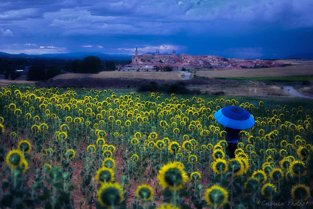 Photo in Rural #paragüas #umbrella #girasoles #sunflowers