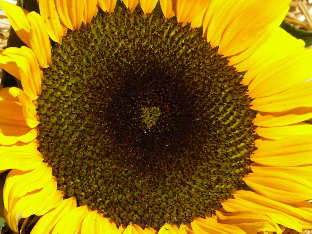 Flowers 1-39 by molyjoseti