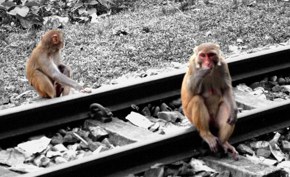 Monkeys - Save wild life   by Avijit Saha