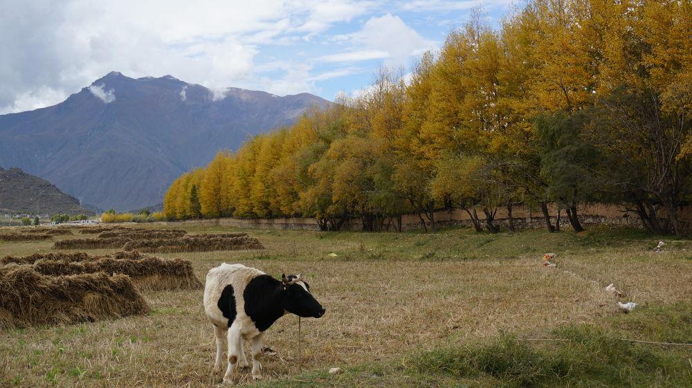 Beautiful Life in Tibet by garyking168