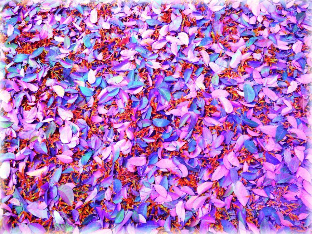 leaf by Shaeful Muad