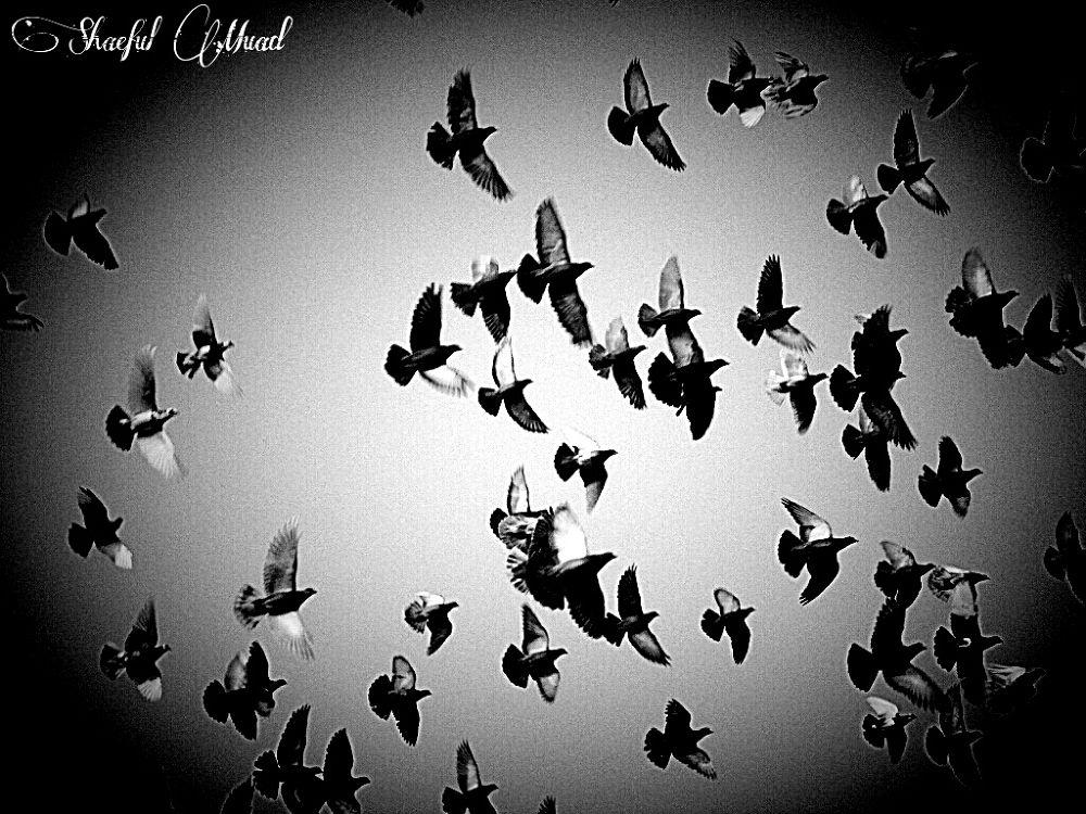 pigeon by Shaeful Muad