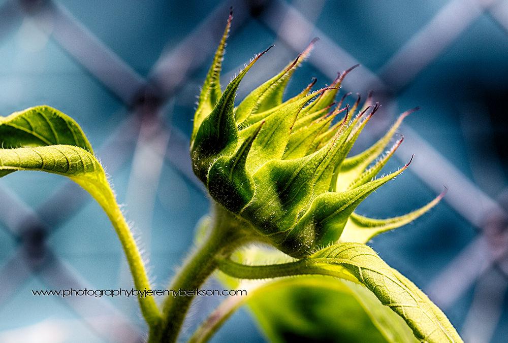 © Copyright Jeremy Berkson. All Rights Reserved. by jeremyberkson