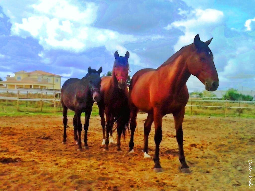 Family of horse. by carlosrocha397948