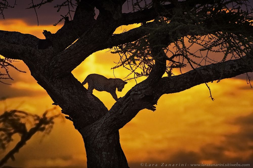 walk at sunset by zanarini lara