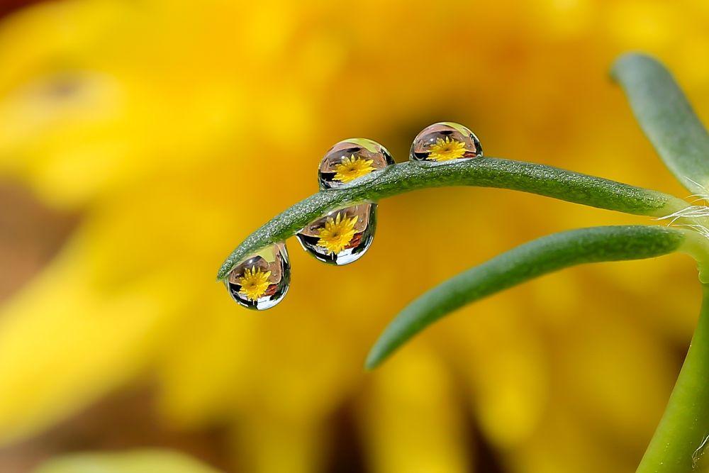 Water Drops  by JL Tan