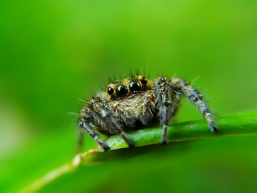 Photo in Macro #spiders #jumping spider