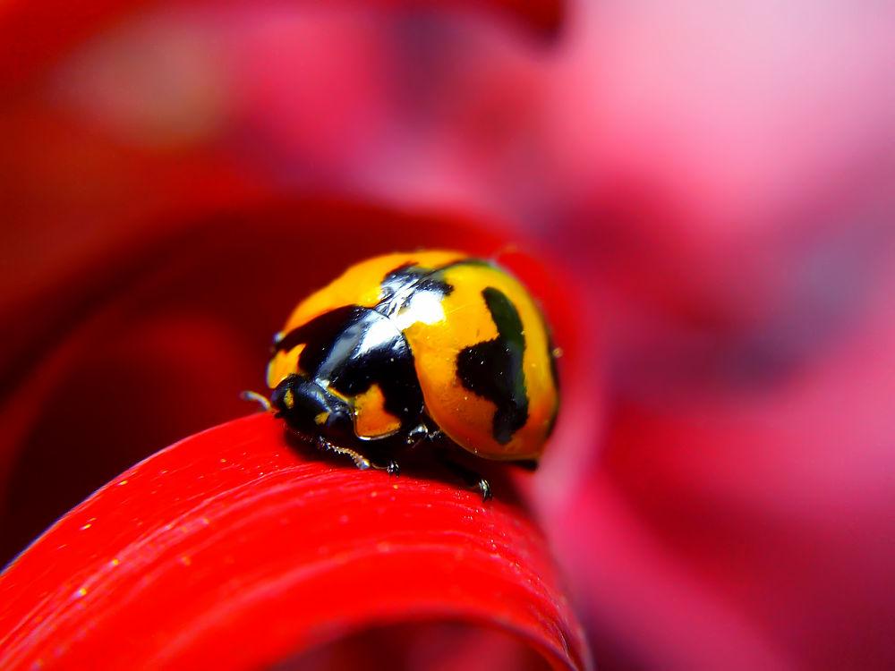 ladybug  by hendrata yoga surya