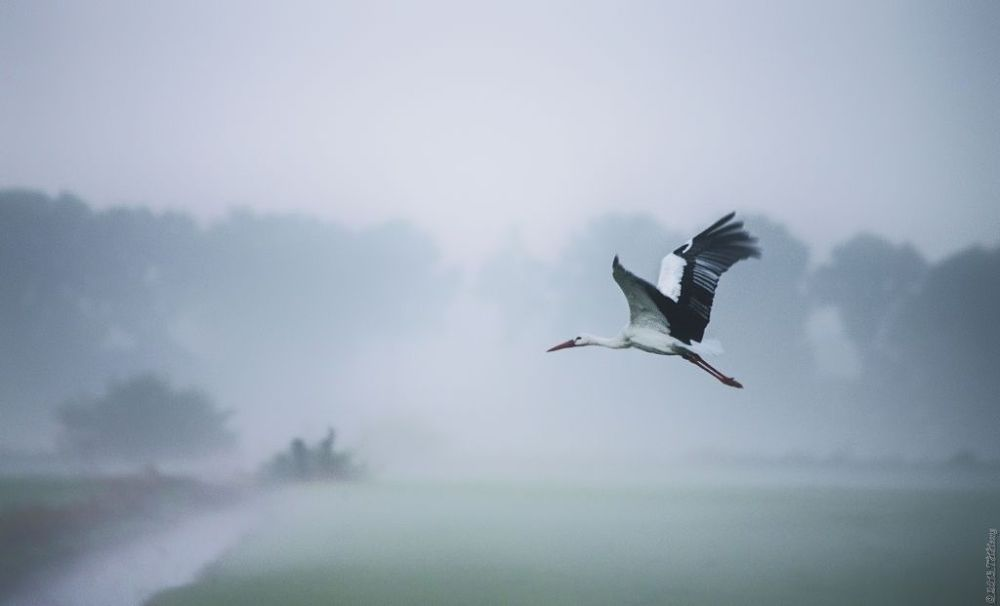 Misty day by TH Hoang