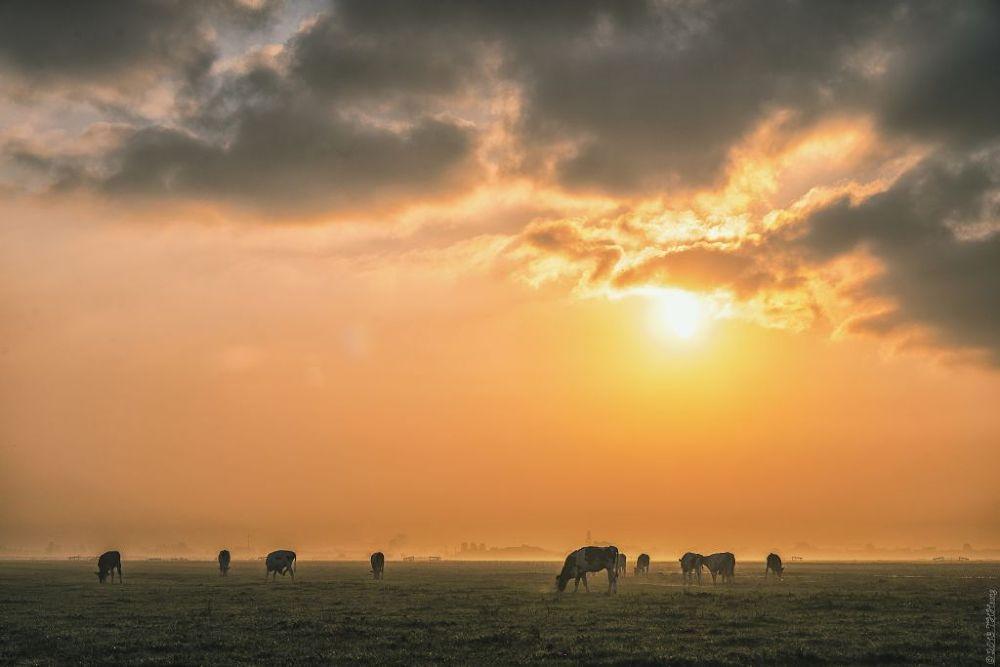 Prairie by TH Hoang