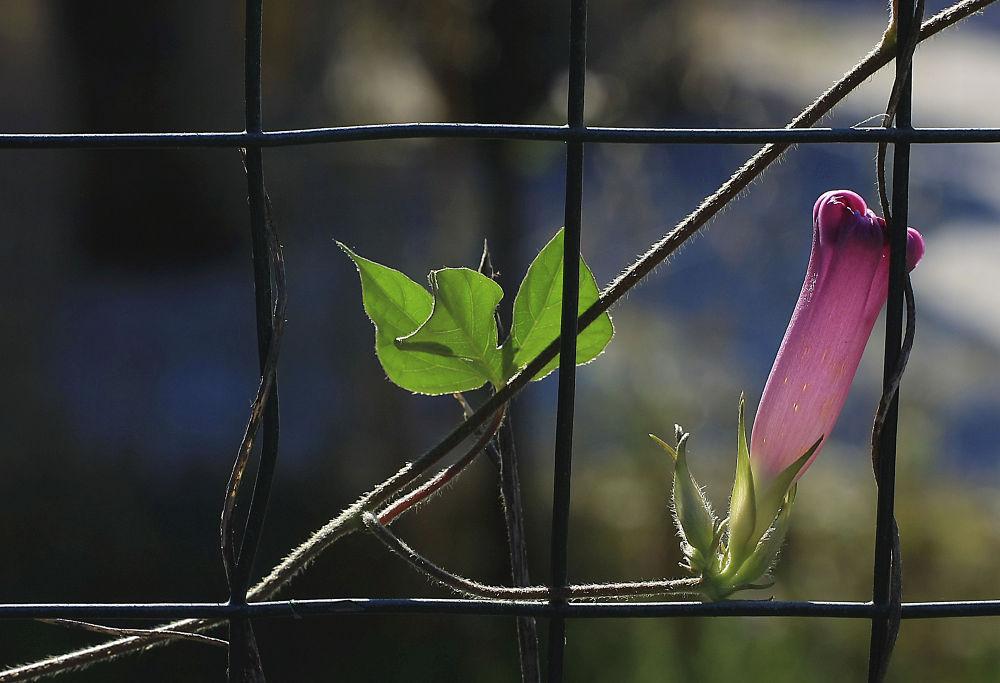 il fiore e la foglia by robyBurchi