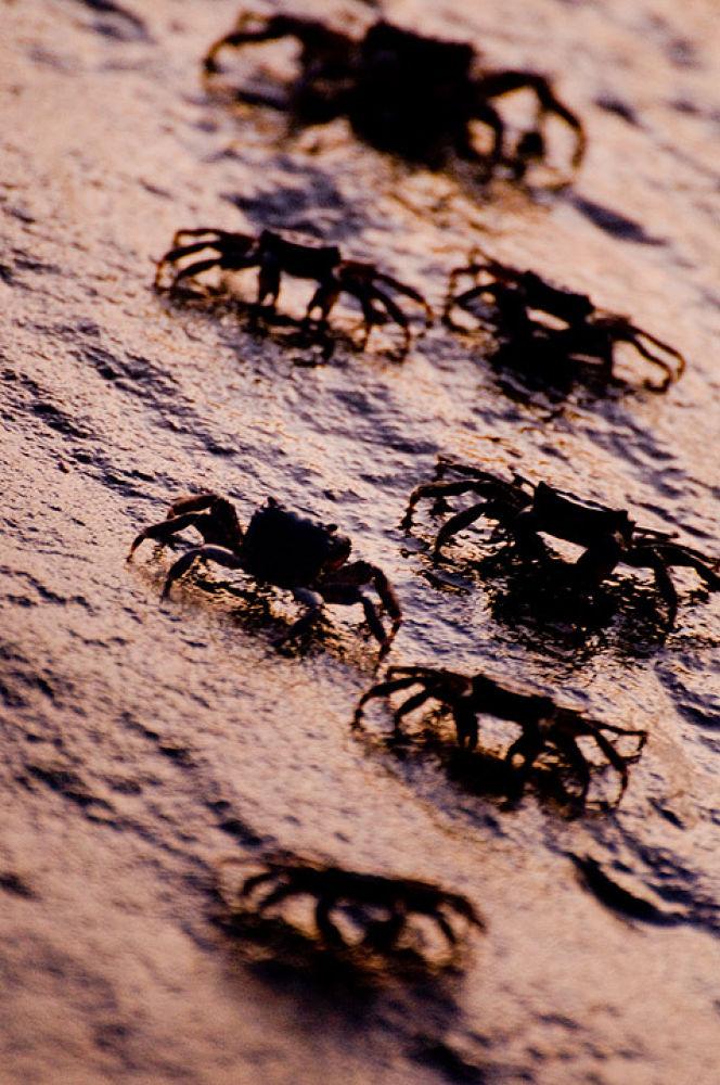 crabs by Fabrizio Nicolai
