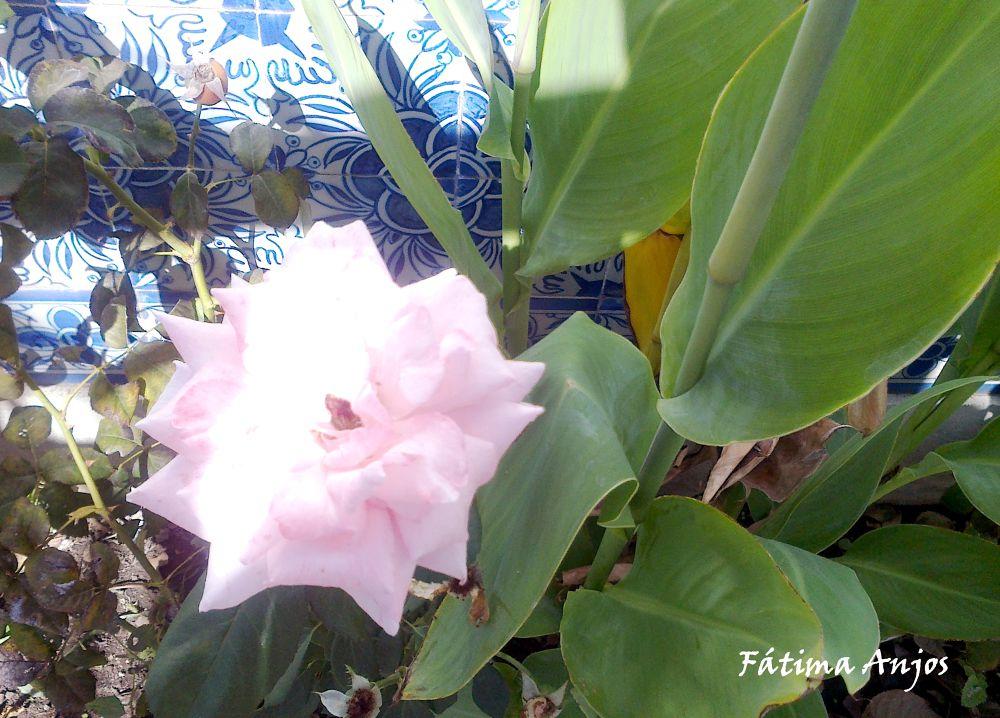 Rosa de Luz by fatimaanjos180
