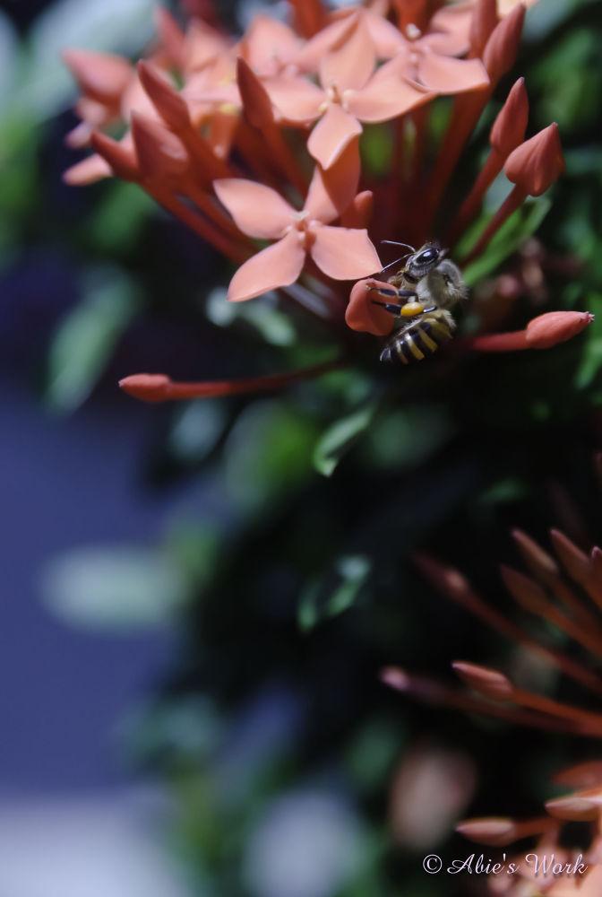 Bee on my yard by rosananta