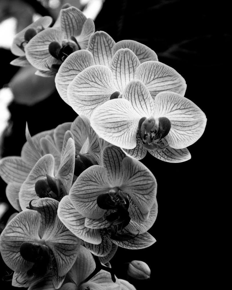 BW flowers by Luca Marcato