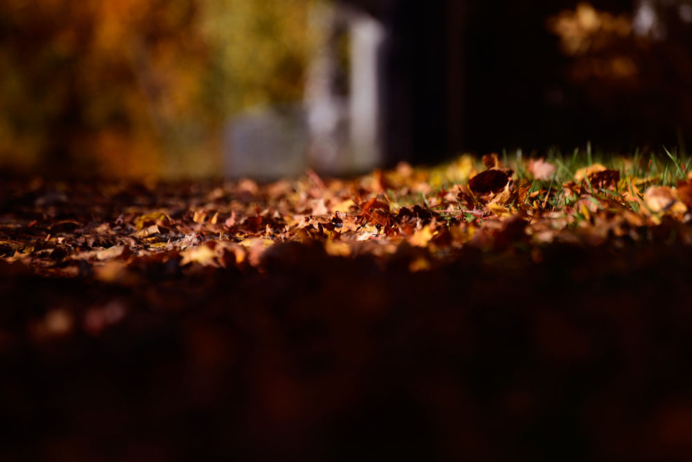 Beautiful autumn brown by josephmichalak1
