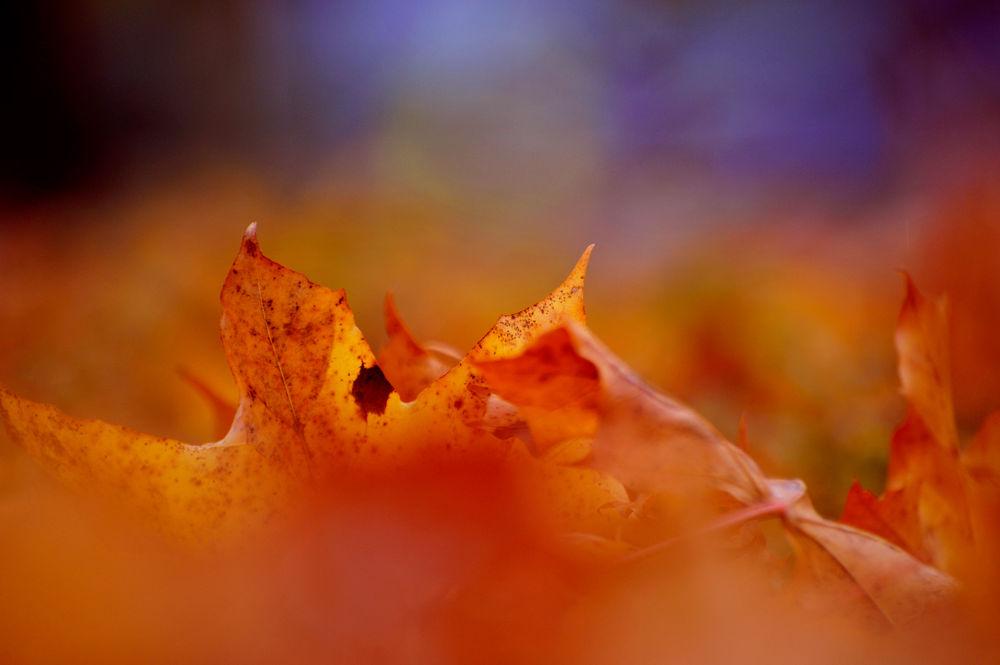 Gold Autumn  by josephmichalak1