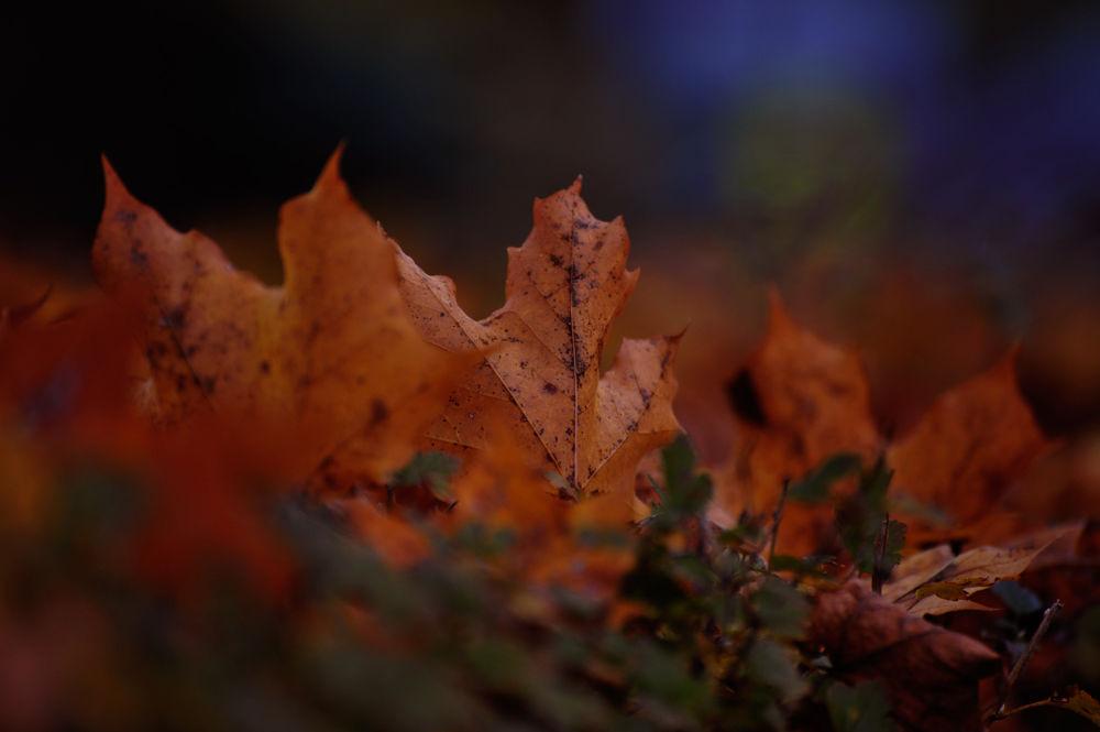 Brown light Autumn  by josephmichalak1