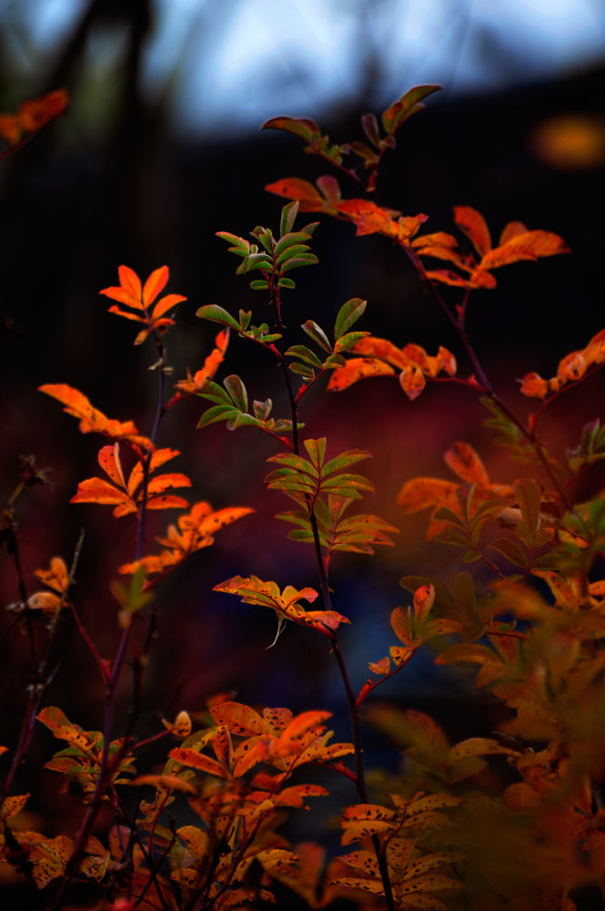 Color autumn by josephmichalak1