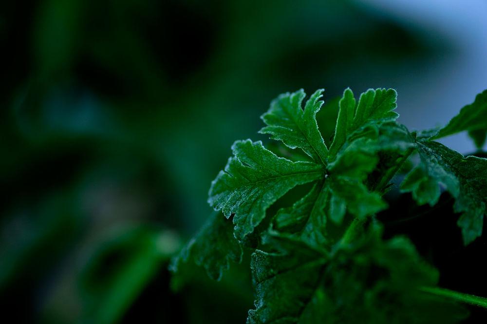 Cold green  by josephmichalak1