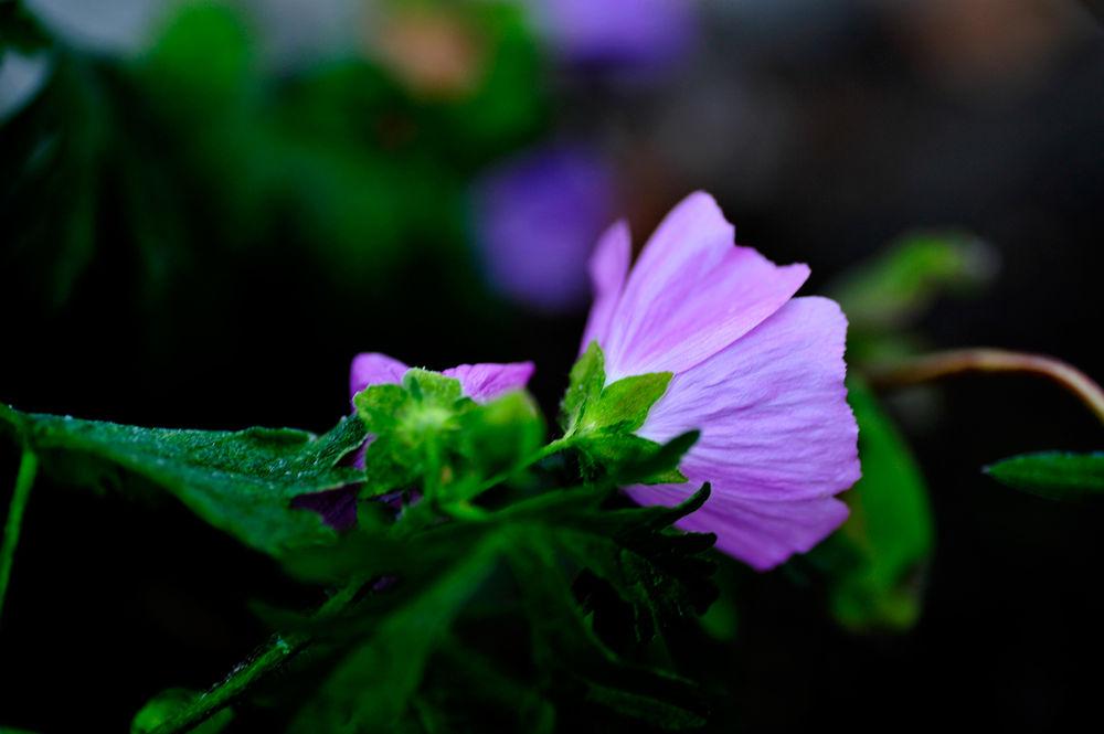 Cold flowers by josephmichalak1