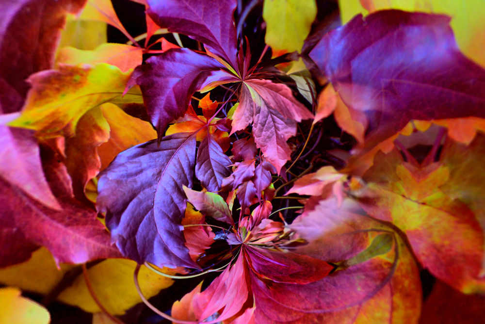 Very nice Autumn by josephmichalak1