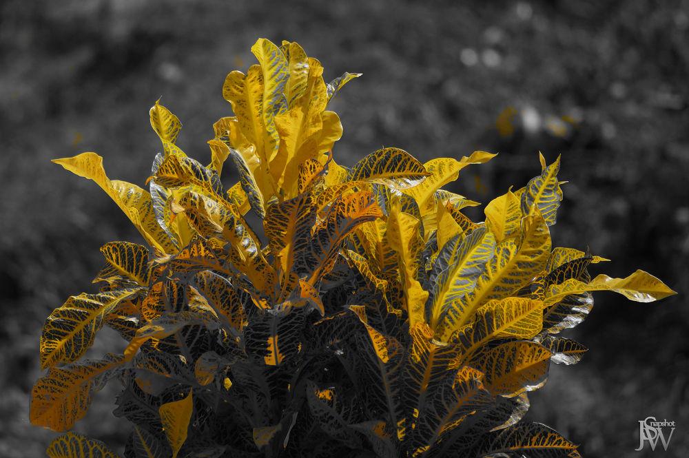 Photo in Random #plant #partial