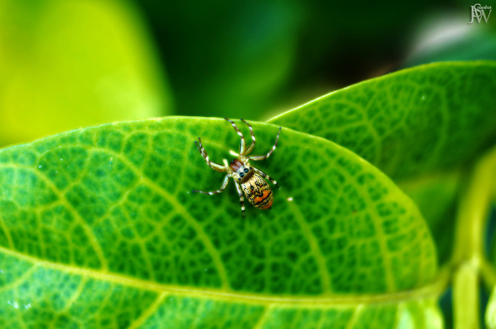 Photo in Random #spider #animal #macro #plant
