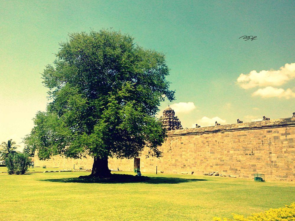 Lawn of a Old Temple. by sadeeshkathavarayan