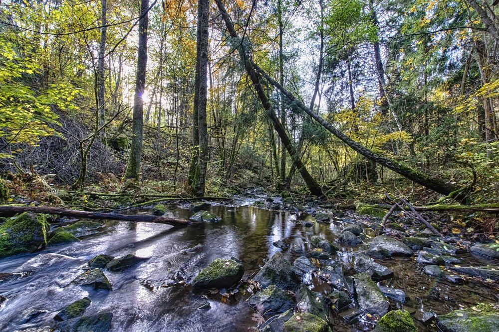 forest stream by Bjørn