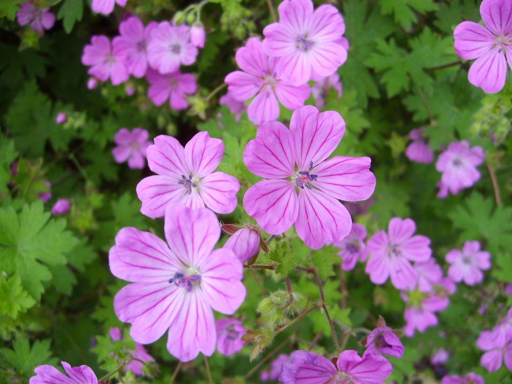 Flowers by alirezaseify