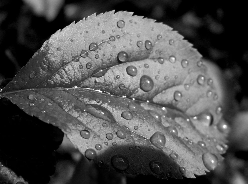 Drops by alirezaseify