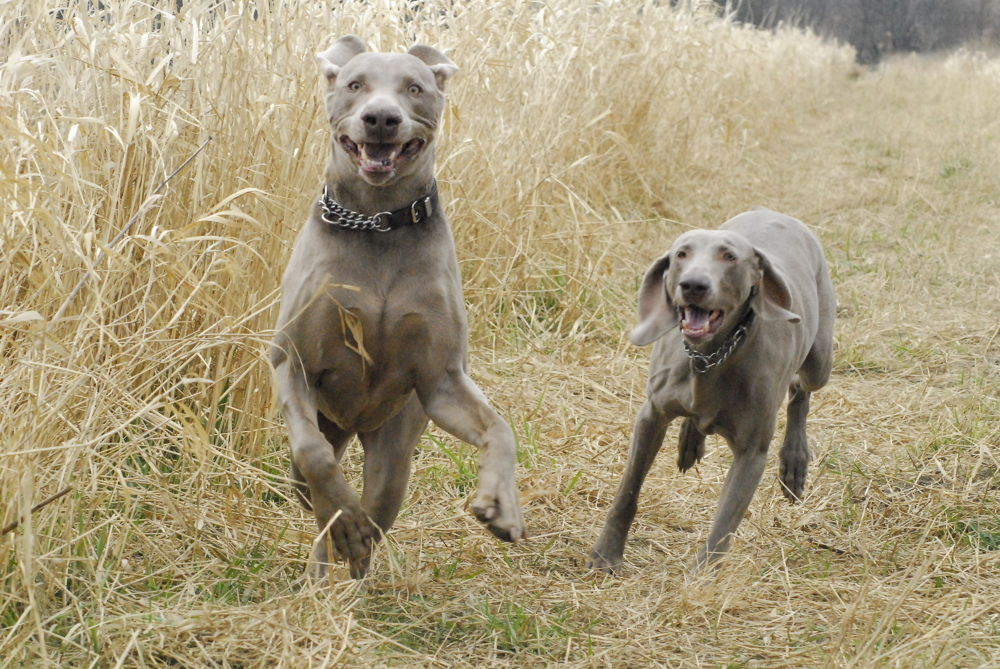 Otis and Eva by gordon veitch