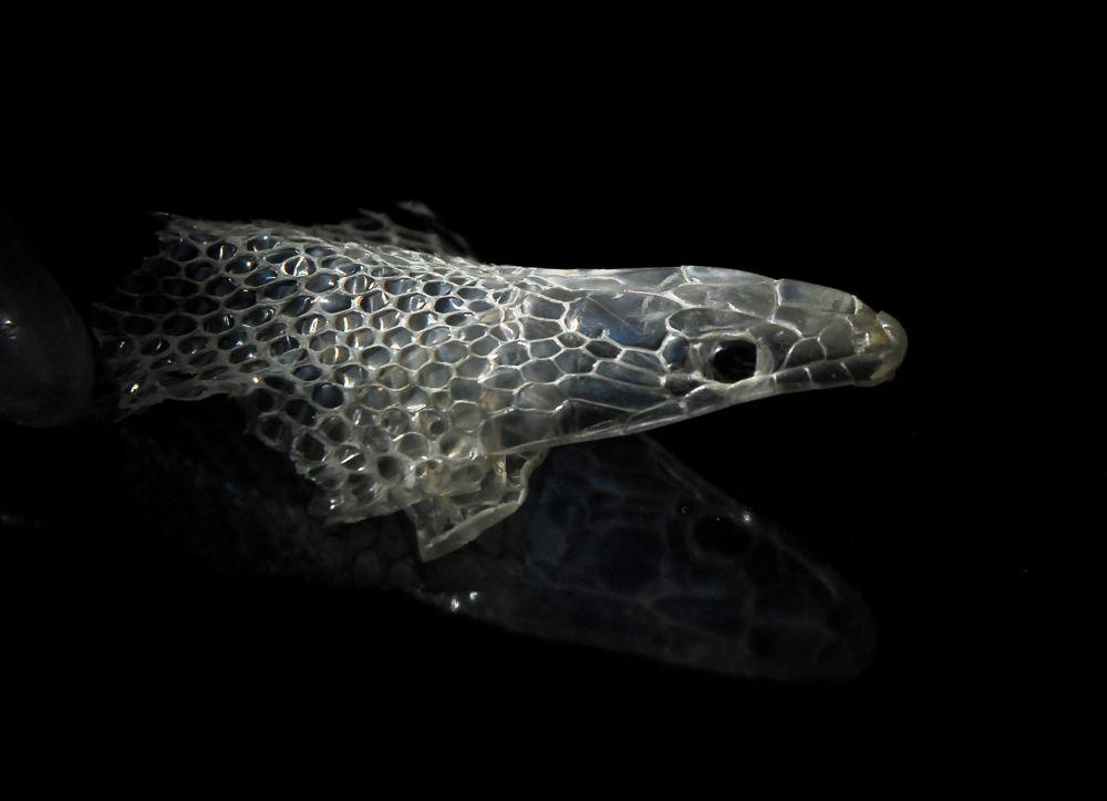Snake skin. by gordon veitch