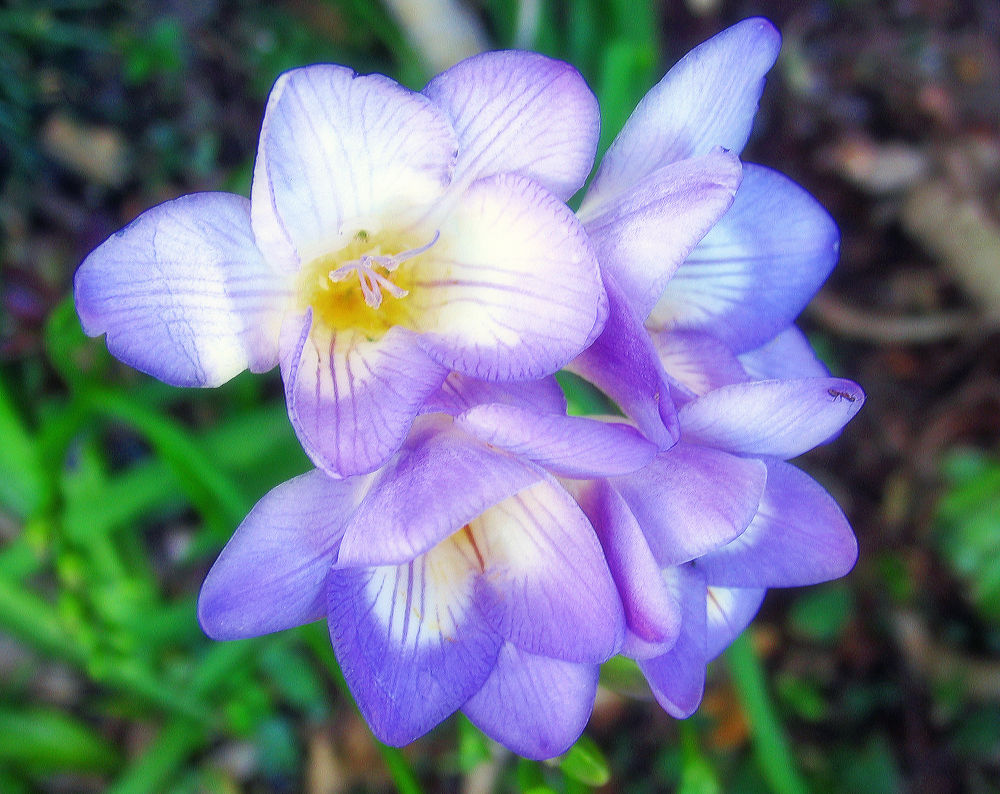 Flower by Jim McCullaugh