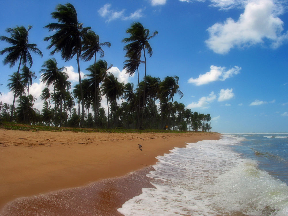 Praia do Forte Brasil by Jim McCullaugh