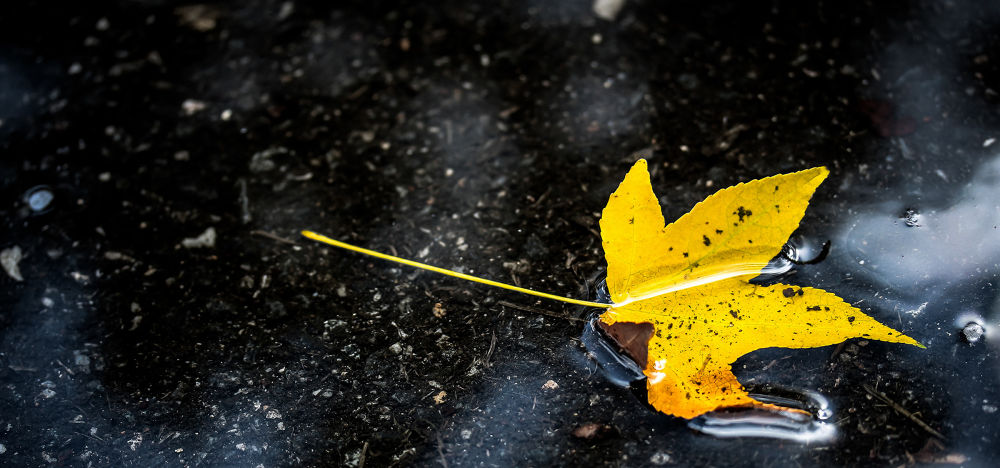 Photo in Nature #autumn #falls