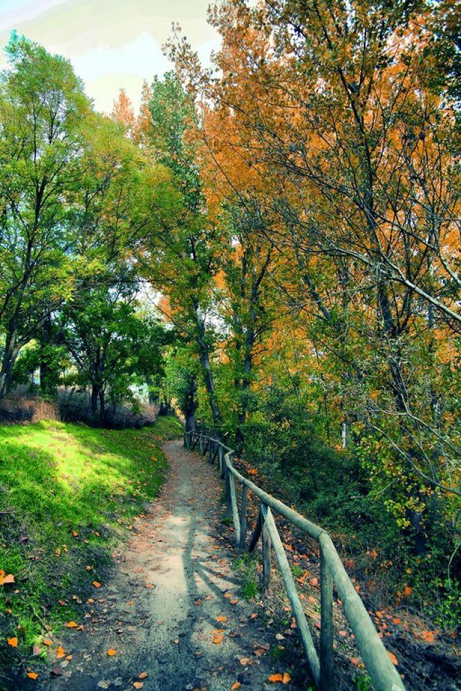El Bosque by julio rubio